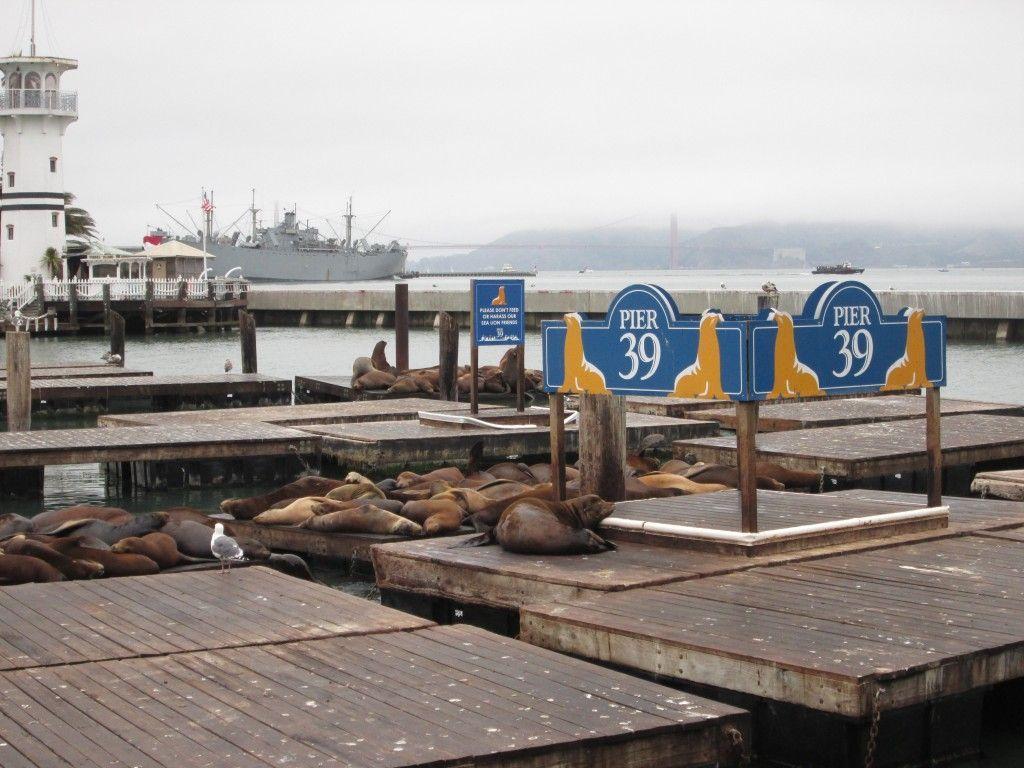 Leones marinos, San Francisco