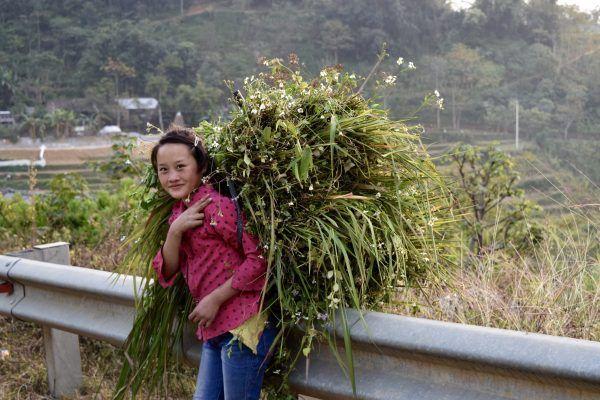 Niña con fardo en Ha Giang