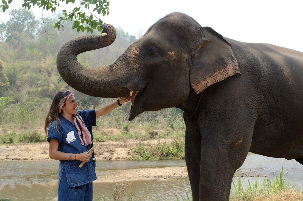Motivos para viajar sola - elefante