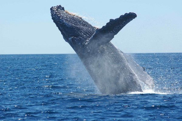 Puerto López y las ballenas jorobadas
